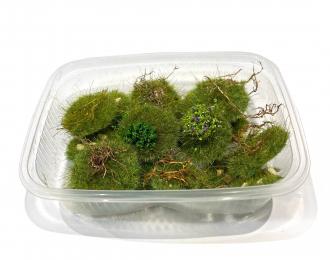 Пучки травы, микс, 20 шт. / -2 -6 мм